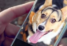 00-best-dog-apps-for-android